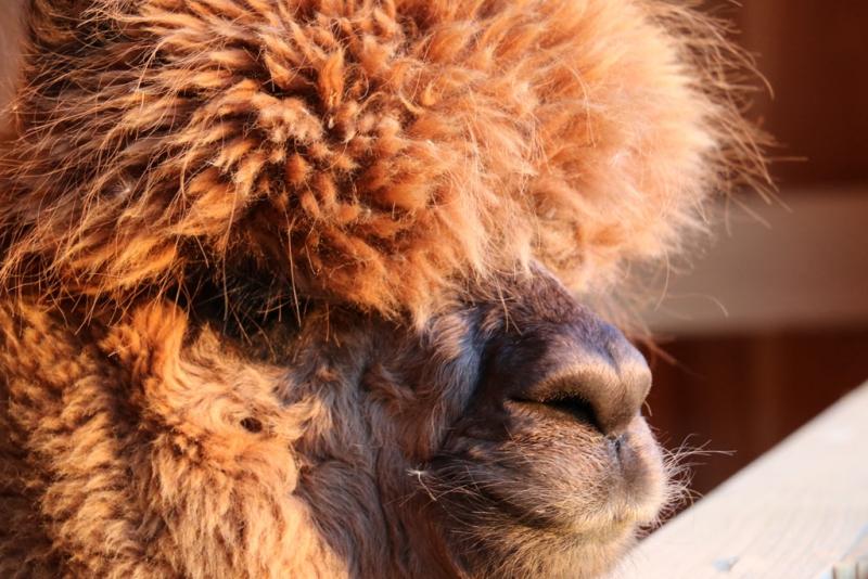 Apfelland Aplakas - Unsere Tiere